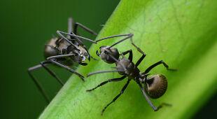 Co należy zrobić, aby ocalić owady?
